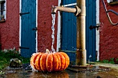 Pumpkin being washed under a pump in front of a house
