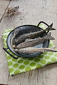 Deko-Fische im Emailletopf