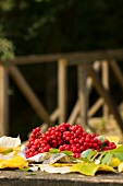 Rowanberries on a table, alfresco