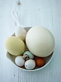 Verschiedene Eier im Küchensieb