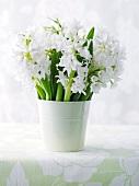 White hyancinths in a vase