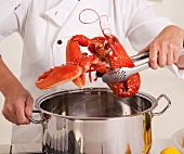 A chef holding a cooked lobster above a pot