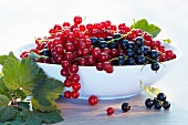 Redcurrants and blackcurrant in a bowl