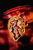 Half a cacao pod filled with cocoa beans