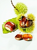 Edible chestnuts with and without prickly shells