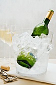 A bottle of white wine in a wine cooler