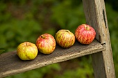 Organic apples on a wooden ladder