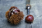 Sweet chestnuts on antique fork and in shell