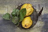 Two quinces in a basket