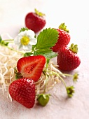 Strawberries and strawberry flowers