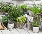 Various types of fresh herbs in baskets and flower pots