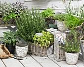 Verschiedene frische Kräuter in Körben und Blumentöpfen