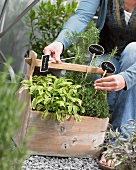 A woman sticking labels in a box of herbs