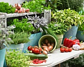 Fresh herbs and summer vegetables on a terrace