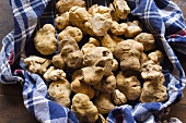 White Alba truffle on a checked cloth