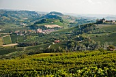 A view of the vineyards in the valley of Barolo (Piedmont, Italy)