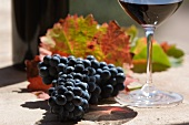 Sagrantino grapes from the Montefalco region (Umbria) and a glass of red wine