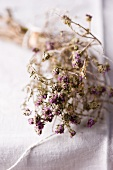 Wild organic thyme from Sicily (dried)