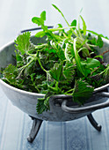 Fresh herbs for a herb salad in a colander