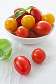 Various cherry tomatoes and basil