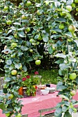 Table set with pink tablecloth under apple tree
