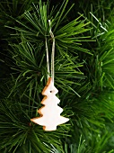 A Christmas biscuit hanging on a Christmas tree