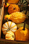 Basket of Mixed Organic Gourds on Display at Farm Market