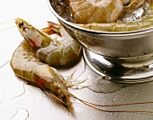 Whole Shrimp on a Steel Surface; Shrimp in a Colander with Ice
