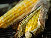 Two Ears of Corn on the Cob in Husks on Grill