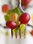 Red and Green Grapes on a Fork with Grape Leaf