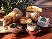 Various types of cheese from Corsica