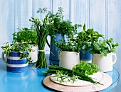 Various fresh herbs in jugs