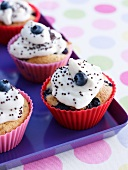Blueberry cupcakes with poppy seeds