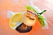 Grilled scallops with a shiitake mushroom and lemon (Asia)