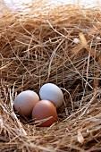 Three Fresh Organic Eggs in a Hay Nest