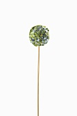 Pistachio lollipop