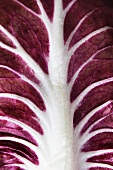 A radicchio leaf (close-up)