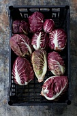 Radicchio in a plastic crate (seen from above)