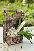 A basket filled with blooming wild garlic