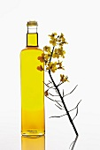A bottle of rape seed oil, with rape blossoms next to it