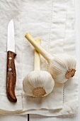 Argentinian garlic on a cloth with a knife