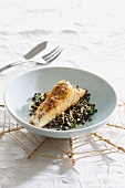 Shade-fish on a bed of lentils