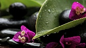 Nasse Steine, Bougainville-Blüten und Blätter