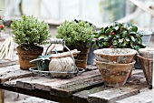 Autumn plants, wire basket and terracotta pots on rustic table