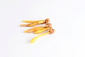 Krachai (Thai finger root)