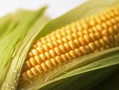 A corn cob (detail)