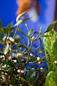 Sprigs of mistletoe as Christmas decoration