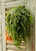 Large Bunch of Organic Carrots Hanging From a Weathered Shutter