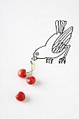 Ripe cherries and drawing of bird