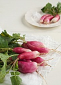 A Bunch of French Breakfast Radishes on a White Cloth